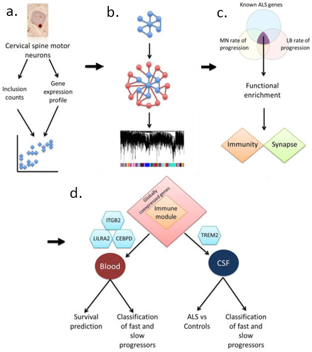 Can immune gene expression predict pace of motor neuron destruction modular mining starting by linking transcripts to disease pathology a researchers assembled modules of genes b that correlated with disease phenotypes ccuart Images