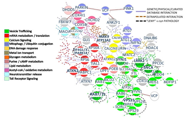 Lindquist Leaves Behind Parkinson's Interactome as Her