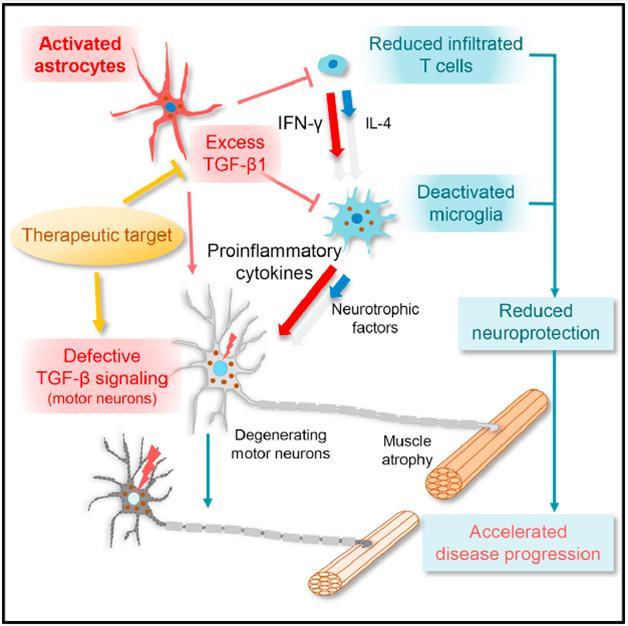 In Als Astrocyte Tgf 1 Pulls Rug From Under Motor