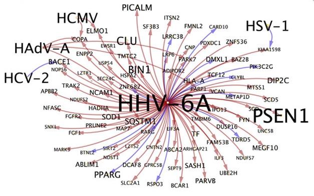 Aberrant Networks in Alzheimer's Tied to Herpes Viruses | ALZFORUM